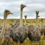 Do You Have 23 Questions for Your Contractor, or are you an Ostrich?
